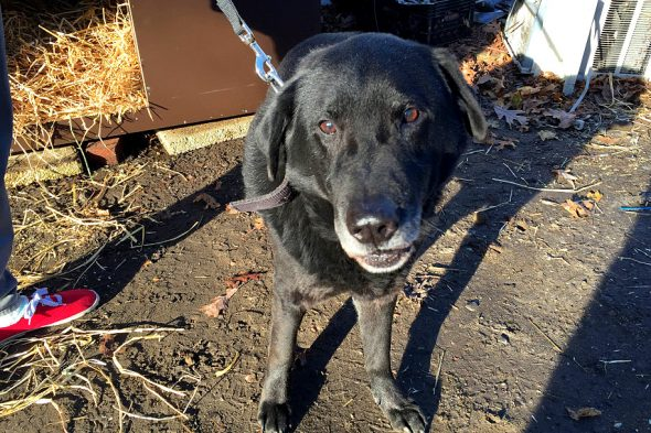 Update dog who spent 15 years outside on a chain has been adopted