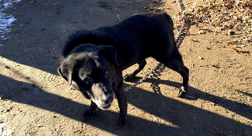 Dog Chained Outside for 15 YEARS Is Finally Free!