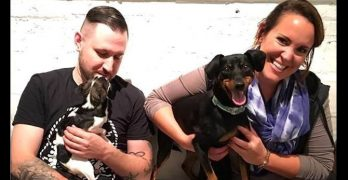 Tiny, Toothless Dog Finds His Perfect Family