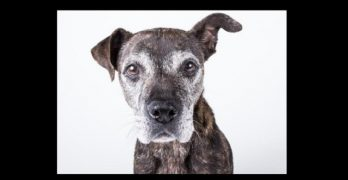 Peggy is the Sophisticated Older Gal of Your Dreams!
