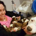 "New Dog Mom ""Gives"" All of Her Puppies to Her Foster Mom"