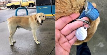 "Man Finds a ""Lost"" Dog That's Not Lost at All…"