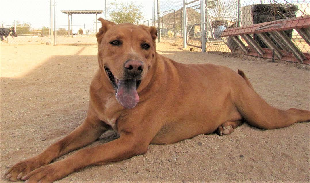 San Tan Valley Dog Rescue