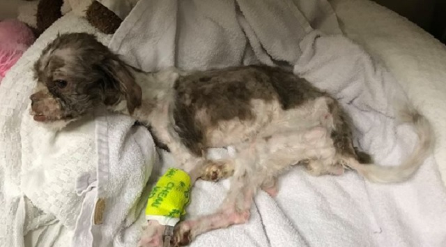 Liz Was Starved, Frozen, Saturated in Urine and Is Unable to Stand on Her Own