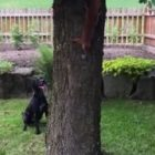 Dog and Red Squirrel Play Ring Around the Oak Tree