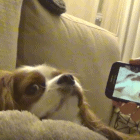 Dog Has Hilarious Reaction to Hearing Himself Snore