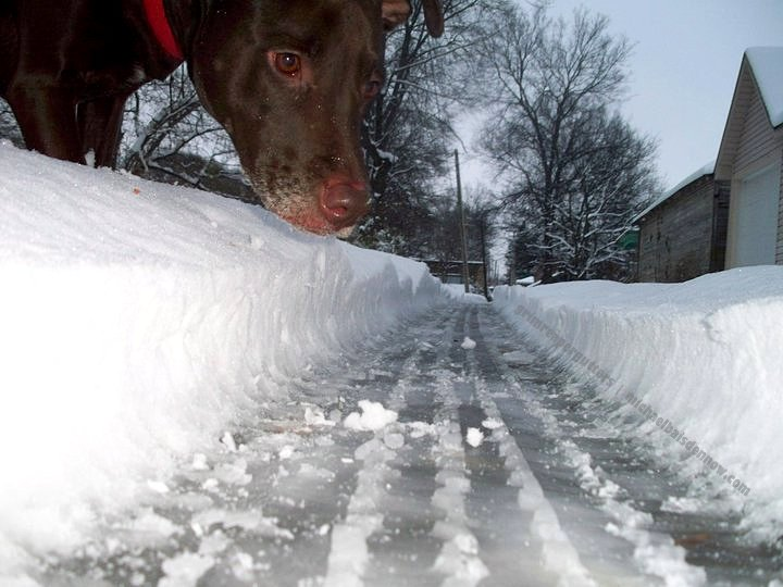dog optical illusions illusion spectacular most dogs