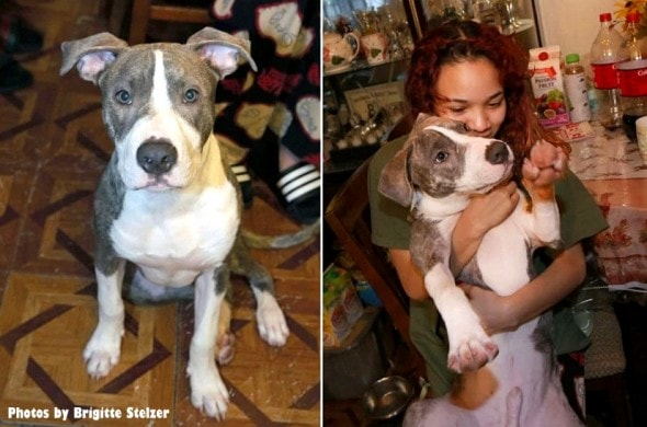 1-5-17-pit-bull-puppy-who-stopped-rape-is-honored0