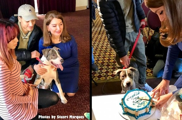 1-5-17-pit-bull-puppy-who-stopped-rape-is-honored1