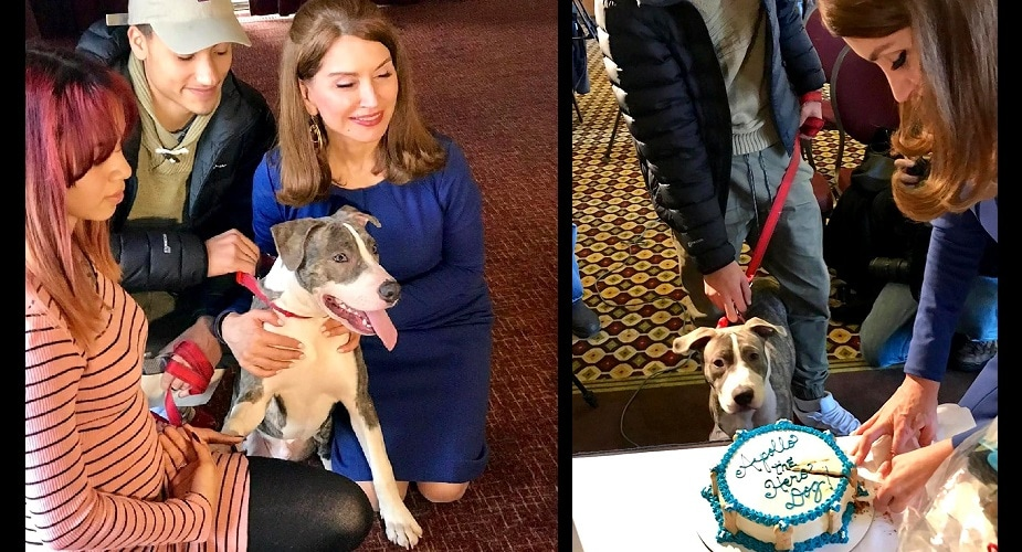 Heroic Pit Bull Puppy Who Stopped His Mom's Rapist Is Honored