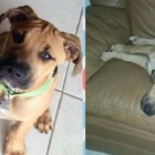 Zeus Has Already Been Through So Much in Just Nine Months of Life, and All He Wants Is Love
