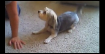 "Dog Does an Impressive Rendition of the ""Moonwalk"""