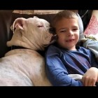 Non-Verbal Six-Year-Old Boy Finds Soul Mate in a Deaf Dog