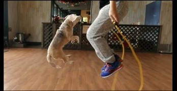 Athletic Dog and Her Human Break World Jump Rope Record