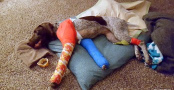 Puppy Miraculously Survives Being Struck by a Car Going at Least 50 MPH