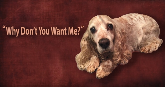 Lament of a Shelter Dog: Why Don't You Want Me?