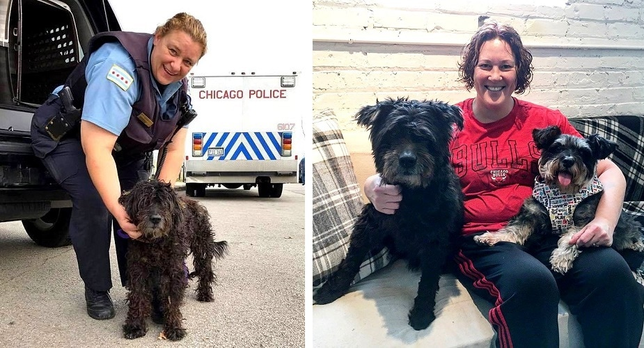 UPDATE:  Senior Dog Who Spent His Entire Life on the Street Has Been Adopted!