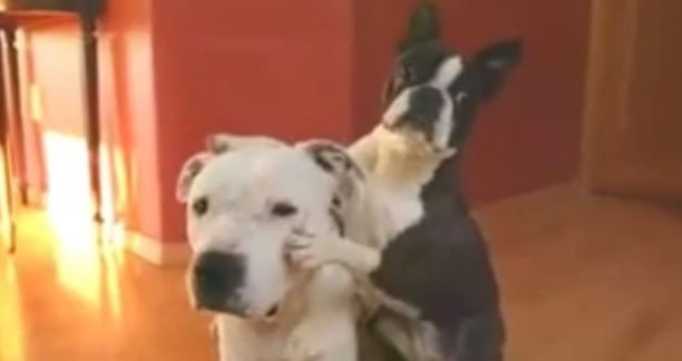 """""""Who's Your Best Friend?"""" These Dogs Know!"""