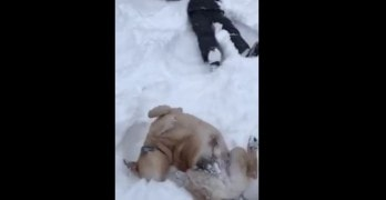 "Pup Makes ""Dog Angel"" Alongside His Human's Snow Angel"