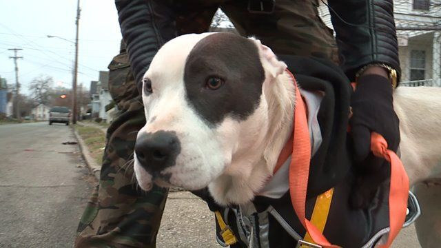 She Was Shot in Her Own Backyard on Christmas, Now Ellie's Owners Want Answers