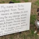 Fashionable Frito Is Planning A Family Reunion!