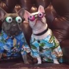 Frenchies. Aloha Shirts. Googly Eyes. 'Nuff Said.