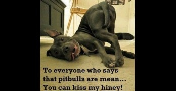 We Love Them! The Story Behind The Pit Bull Life