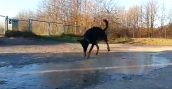 Ice is Nice! Dog Has A Blast Smashing Through Icy Puddles!