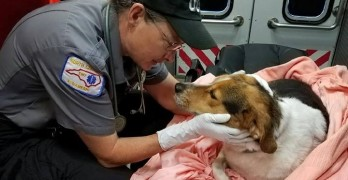 Pupsicle Prevented! Dog Rescued from Icy Pond in NC