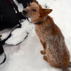 Search Continues: Recent Sighting of Utah Dog Missing in Vermont Brings Hope
