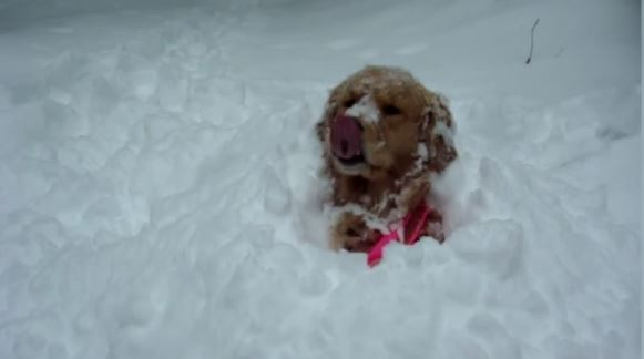 THE WHITE STUFF! Fun Video Showcases Dogs Who REALLY Love Snow