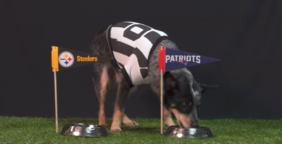 This Dog Accurately Predicted the Winner of Every NFL Playoff Game!