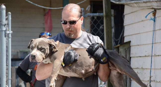 Ten People Indicted on Additional Federal Charges in Quad-City Dog Fighting Ring Bust