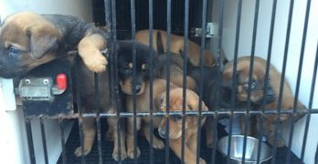 Over 60 Dogs and Other Animals Rescued in Indiana Animal Hoarding Case