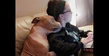 Most Appreciative Rescue Dog Ever Won't Stop Hugging His New Mom