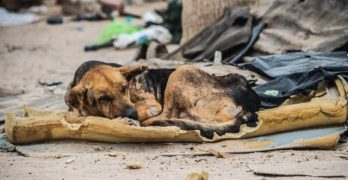 Blind, Starving Dog Found Living in Trash Pile for a Month Makes Miraculous Recovery