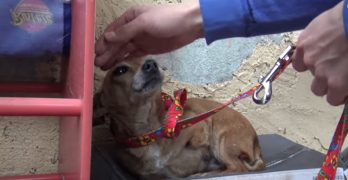 Sick, Three-Legged, Homeless Dog Found Sleeping in the Rain Gets Rescued