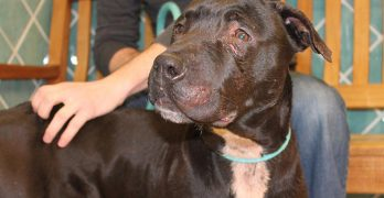 Pennsylvania SPCA Stops Dog Fight In-Progress and Rescues Eight Dogs in the Process