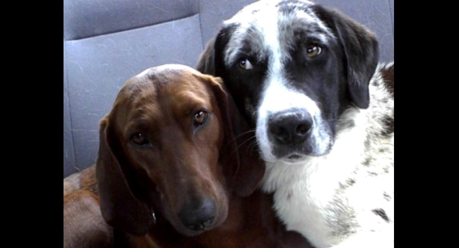 Dog Who Was About to Be Adopted Refused to Leave Her Best Friend Behind