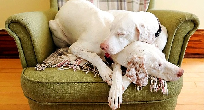 Abused Mama Dog Reunites With Her Daughter After Seven Years & Now They're Best Friends