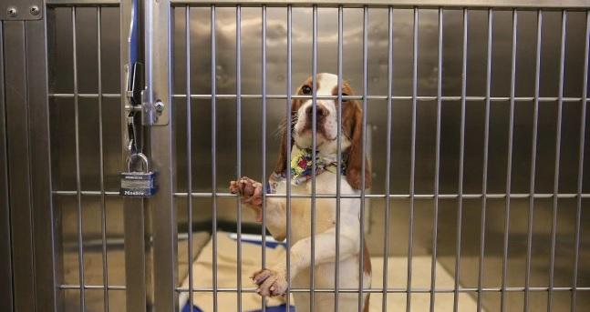 Grand Junction Humane Society Dog Adoption