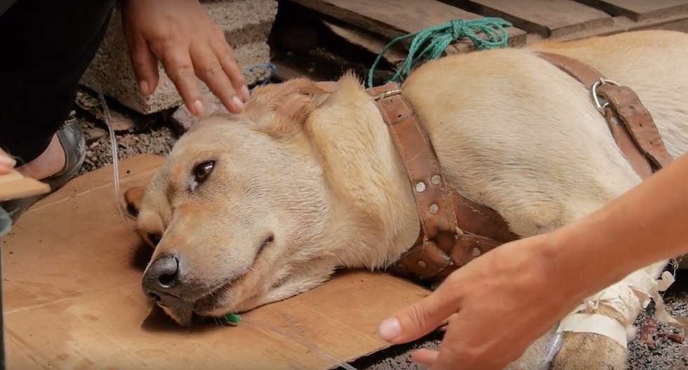 People Create a Makeshift Ambulance to Save the Life of a Dog Accidentally Poisoned