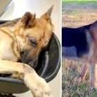 Paralyzed, Unresponsive Dog Was Dumped in a Wheelbarrow, and Now He Can Run
