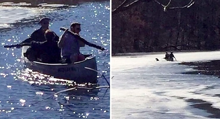Boy Scouts on a Hike Save a Dog Who Had Fallen Through Thin Ice