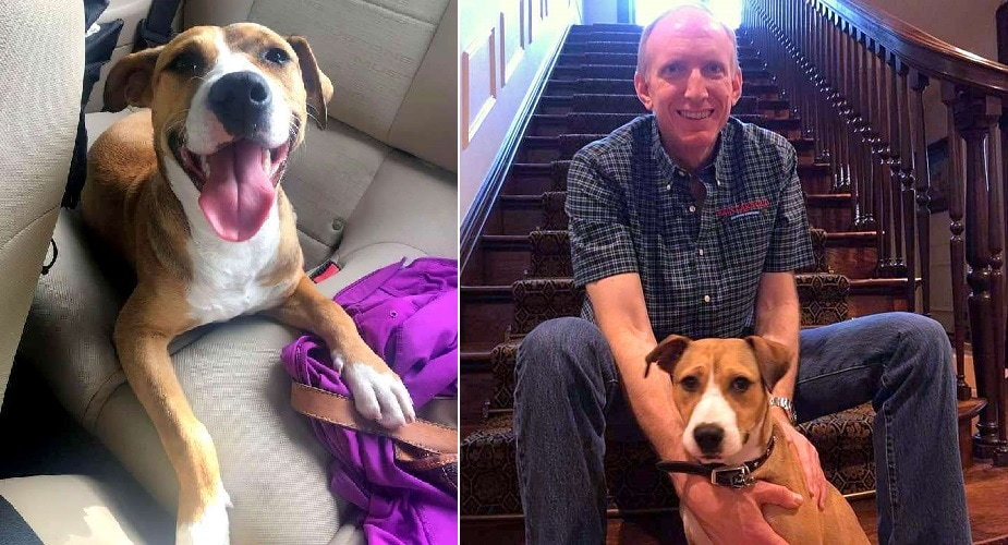 Homeless Dog Who Walked Families from a Museum to Their Cars Is Finally Taken Home