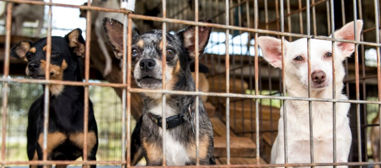 Over Half of the 127 Dogs Seized from a Florida Home Have Been Adopted