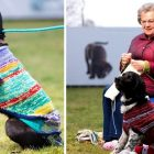 Women's Group Knits Sweaters for Homeless Black Dogs So People Will Love Them