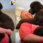 Big Dog Demands to Be Held and Cuddled Like a Little Baby