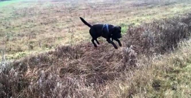 Hank Is a Prolific Leaper! Look at Him Go!