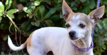 Baby Girl Has Been Waiting Since 2013 for a Forever Family!  Won't Someone Bring Her Home?!